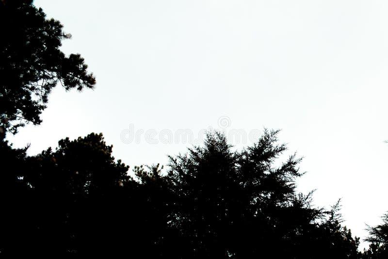 Fondo de la silueta del árbol Silueta de las siluetas de los árboles de pino negro del bosque del árbol de pino para el diseño fotos de archivo