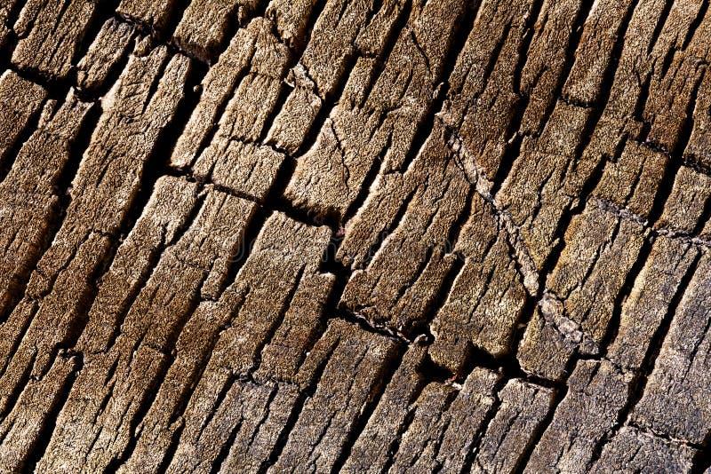 Fondo de la textura - corteza quebrada árbol fotos de archivo libres de regalías
