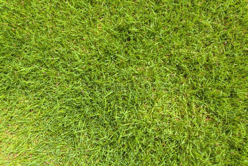 Fondo de la textura de la hierba verde foto de archivo libre de regalías