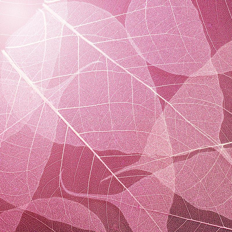 Fondo de la textura de las hojas del rosa Modelo de la decoración del follaje foto de archivo