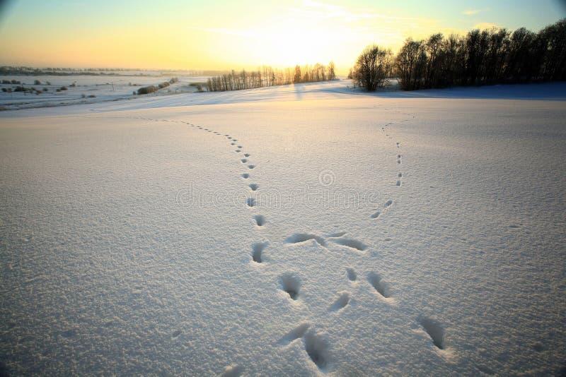 Fondo de la textura del invierno de la nieve del hielo fotos de archivo