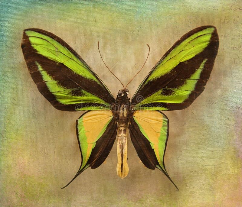 Fondo de la vendimia con la mariposa fotografía de archivo libre de regalías