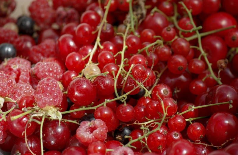 fondo de las bayas jugosas maduras de pasas rojas, de frambuesas y de cerezas Opinión de plan del primer desde arriba fotografía de archivo libre de regalías