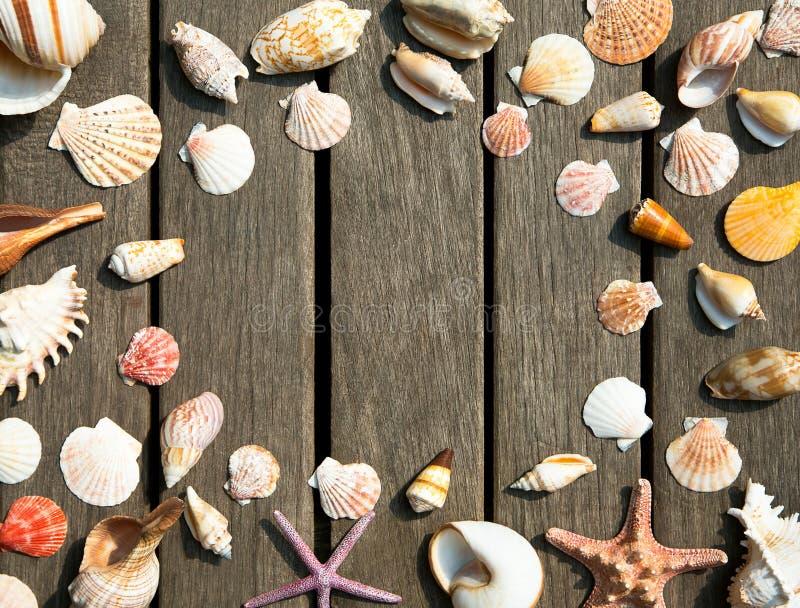 Download Fondo De Las Cáscaras Del Mar Foto de archivo - Imagen de cubo, blank: 42431184