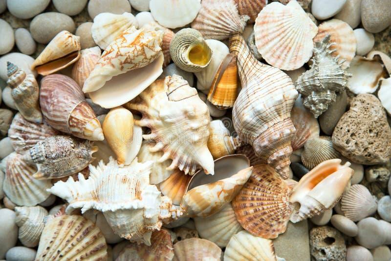 Download Fondo De Las Cáscaras Del Mar Imagen de archivo - Imagen de playa, contexto: 42431229