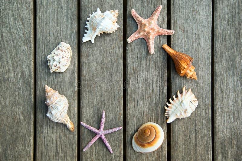 Download Fondo De Las Cáscaras Del Mar Foto de archivo - Imagen de tarjeta, acuático: 42431374