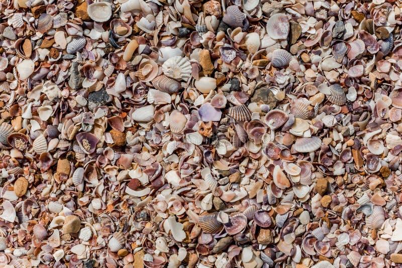 Fondo de las conchas marinas fotos de archivo libres de regalías