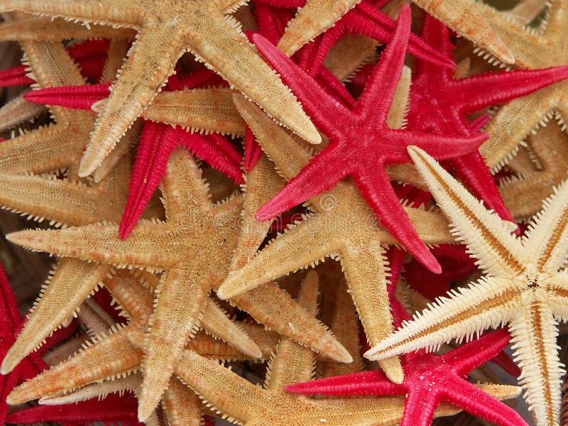 Fondo de las estrellas de mar fotografía de archivo libre de regalías