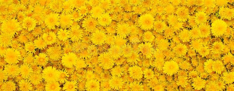 Fondo de las flores amarillas imagenes de archivo