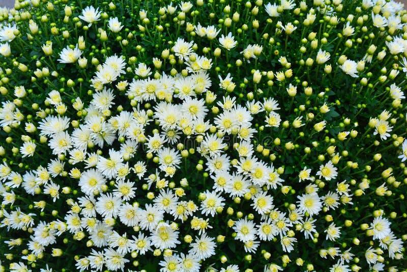 Fondo de las flores blancas fotos de archivo libres de regalías
