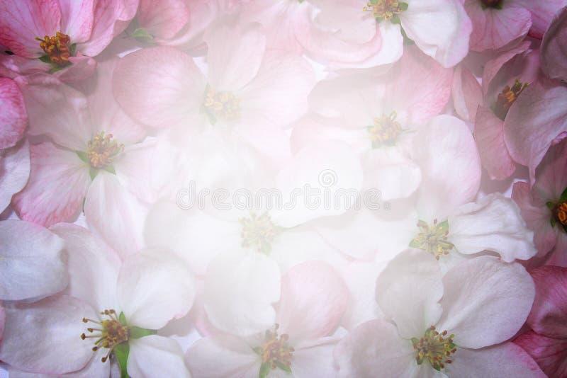 Fondo de las flores de cerezo fotos de archivo
