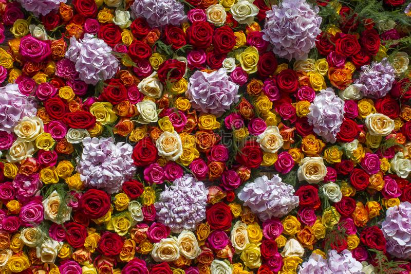 Fondo de las flores - flores y rosas del hortensia imágenes de archivo libres de regalías