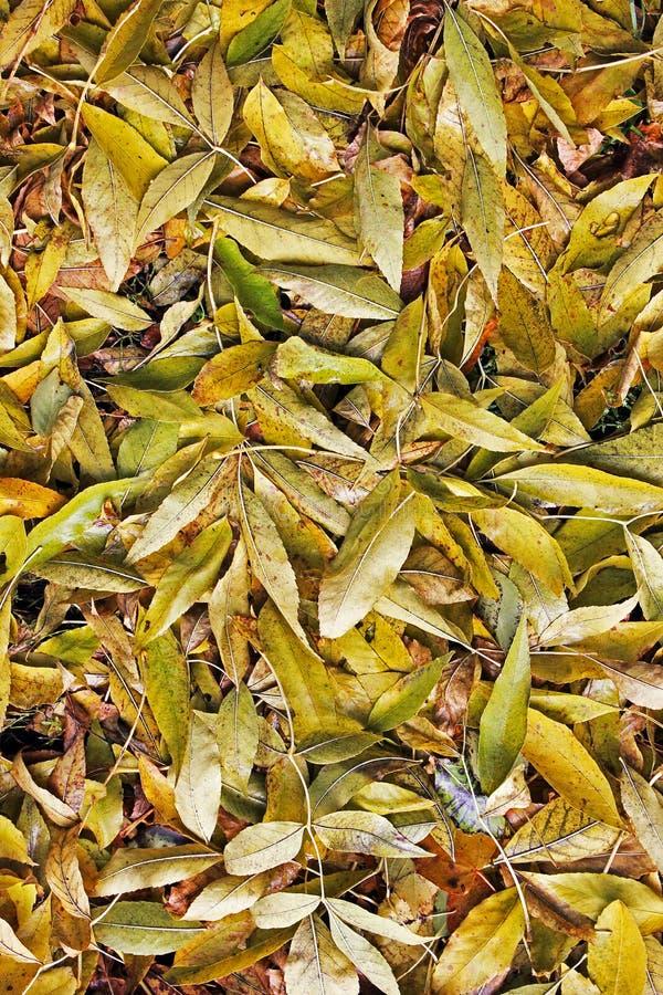 Fondo de las hojas amarillas Otoño imagen de archivo libre de regalías