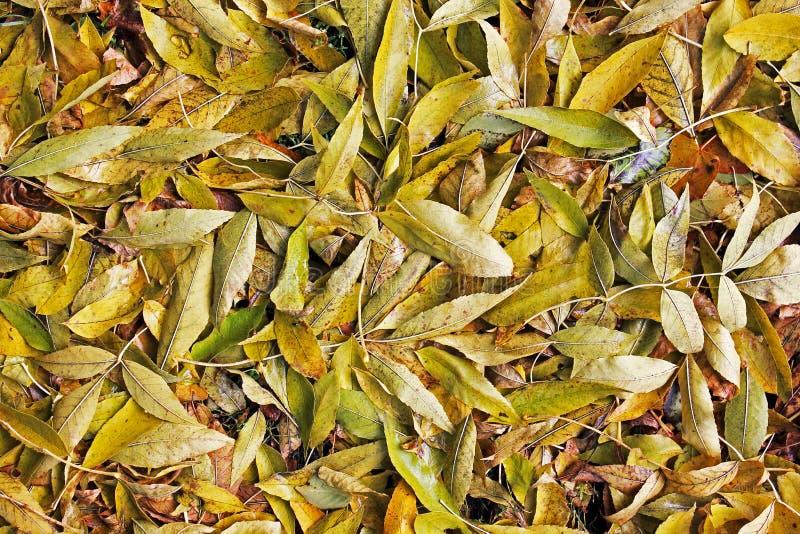 Fondo de las hojas amarillas Otoño fotografía de archivo libre de regalías