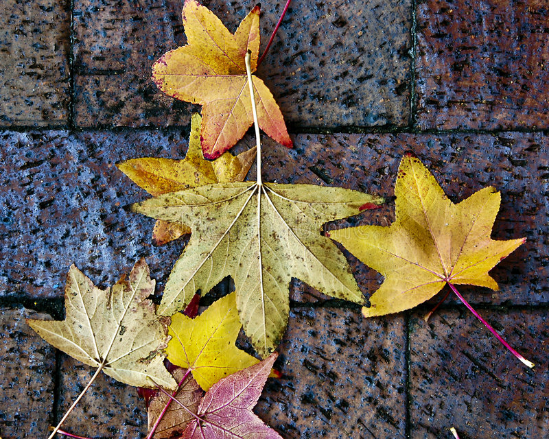 Fondo de las hojas de otoño foto de archivo