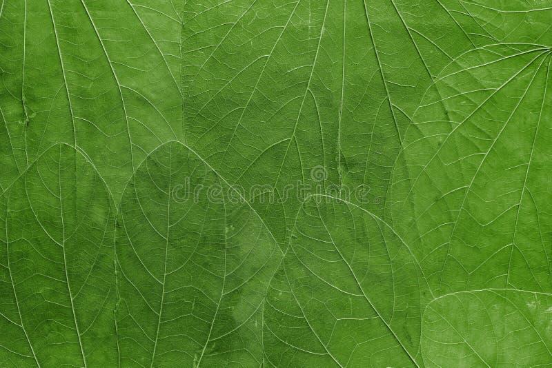 Fondo de las hojas del color verde claro foto de archivo - Color verde hoja ...