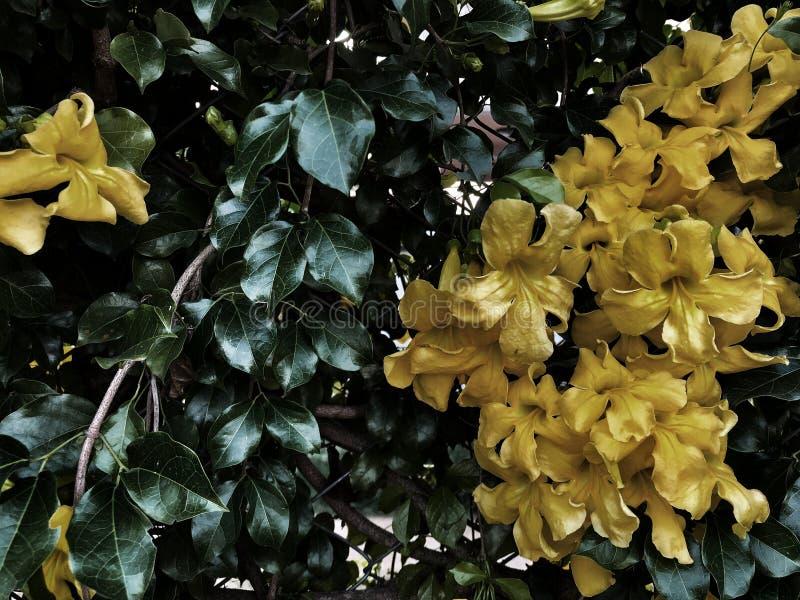 Fondo de las hojas del verde y de las flores del amarillo en luz oscura imagenes de archivo