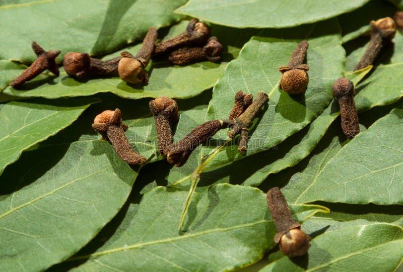Fondo de las hojas y del clavel del árbol de Green Bay fotos de archivo libres de regalías