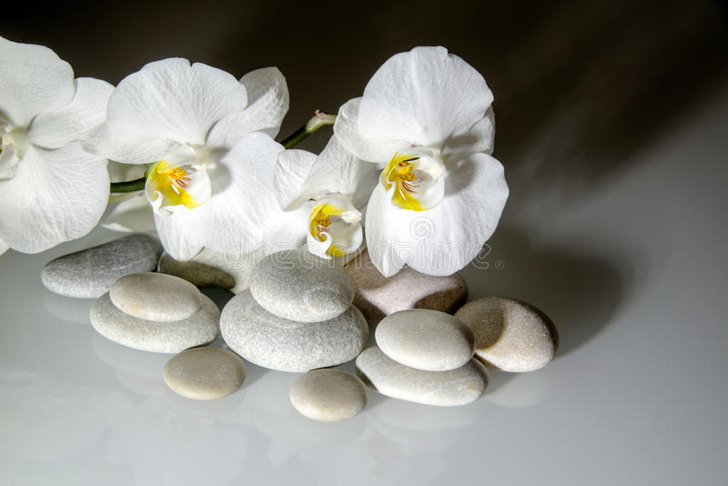 Fondo de las orquídeas blancas imagen de archivo libre de regalías