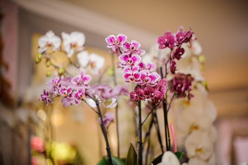 Fondo de las orquídeas blancas, rosadas y carmesís fotos de archivo