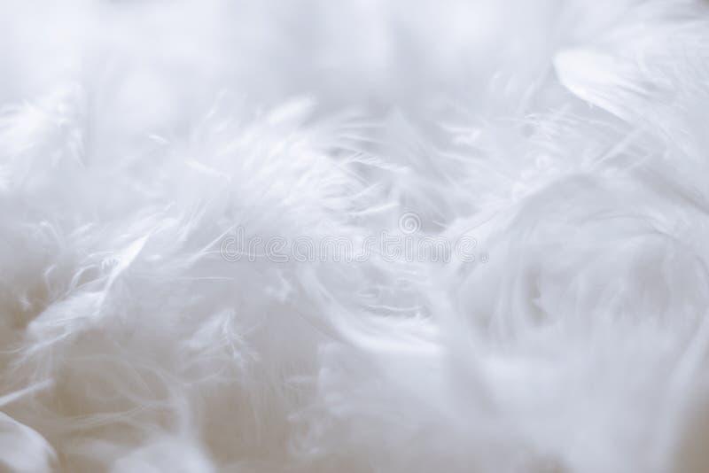 Fondo de las plumas blancas - fotos comunes fotografía de archivo libre de regalías
