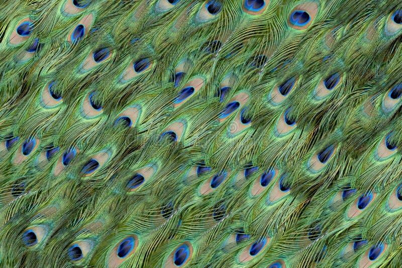 Fondo de las plumas del pavo real fotos de archivo