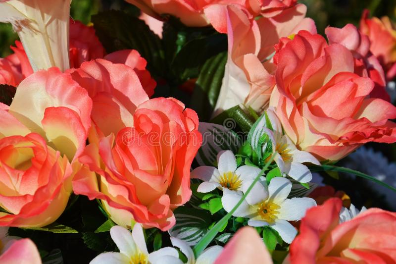 Fondo de las rosas fotografía de archivo