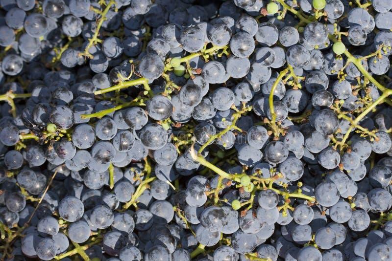 Fondo de las uvas rojas imagen de archivo libre de regalías
