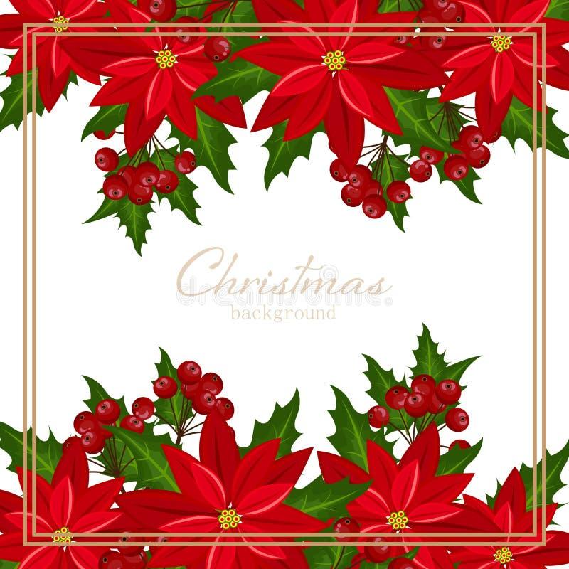 Fondo de las vacaciones de la Navidad con las bayas rojas de la flor y del acebo de la Navidad de la poinsetia imagenes de archivo