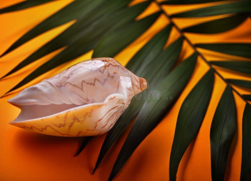 Fondo de las vacaciones de verano Accesorios de la playa: cáscara del mar, hojas de palma tropicales en fondo anaranjado Vacacion imagenes de archivo