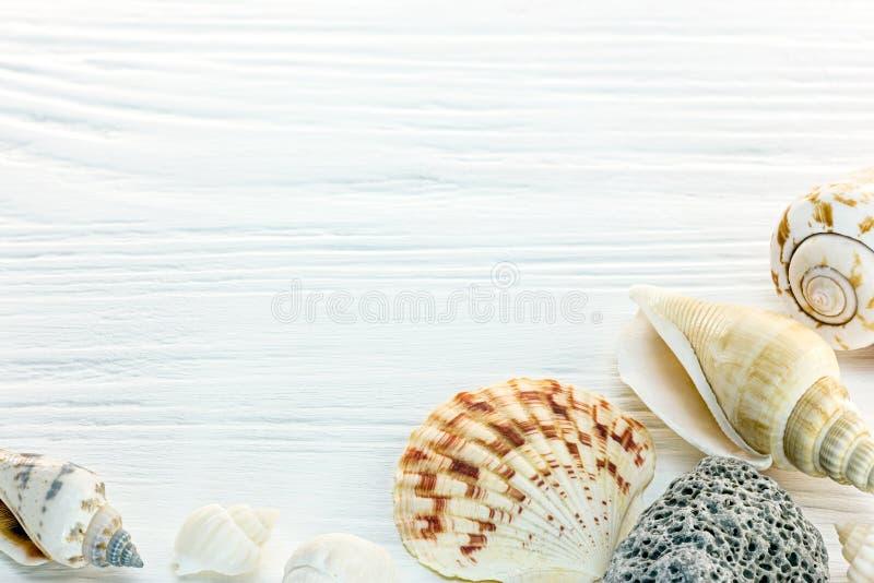 Fondo de las vacaciones de verano con las conchas marinas en la superficie de madera blanca imagen de archivo
