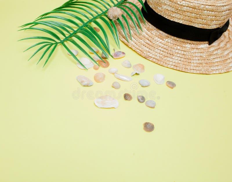 Fondo de las vacaciones de verano Concepto tropical del verano con los complementos, las hojas y las conchas marinas de la mujer  imágenes de archivo libres de regalías