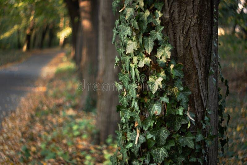 Fondo de los árboles y de las hojas del otoño imagenes de archivo