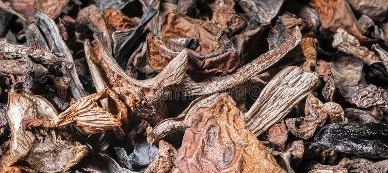 Fondo de los champiñones secados imagenes de archivo