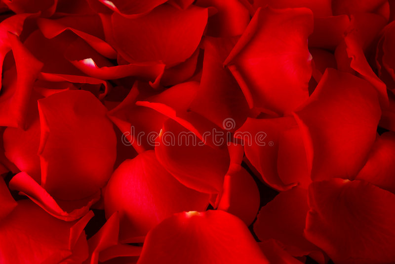 Fondo de los pétalos de Rose imágenes de archivo libres de regalías