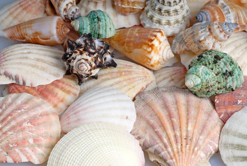 Fondo de los Seashells fotografía de archivo libre de regalías
