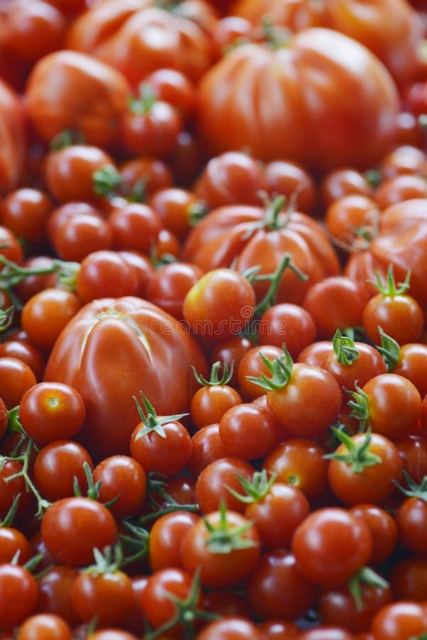 Fondo de los tomates fotos de archivo