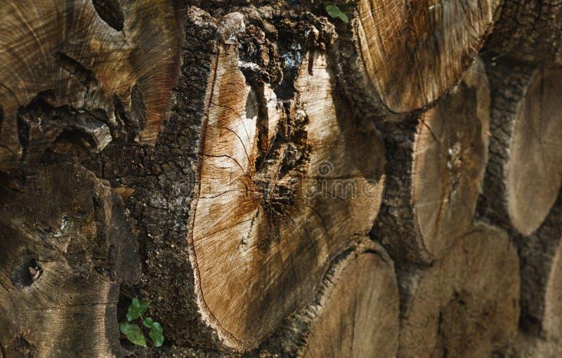 Fondo de los troncos de árbol foto de archivo