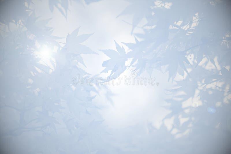 Fondo de luto con las hojas en sombras del gris imagen de archivo libre de regalías