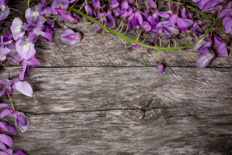 Fondo de madera con glicinia fotografía de archivo libre de regalías
