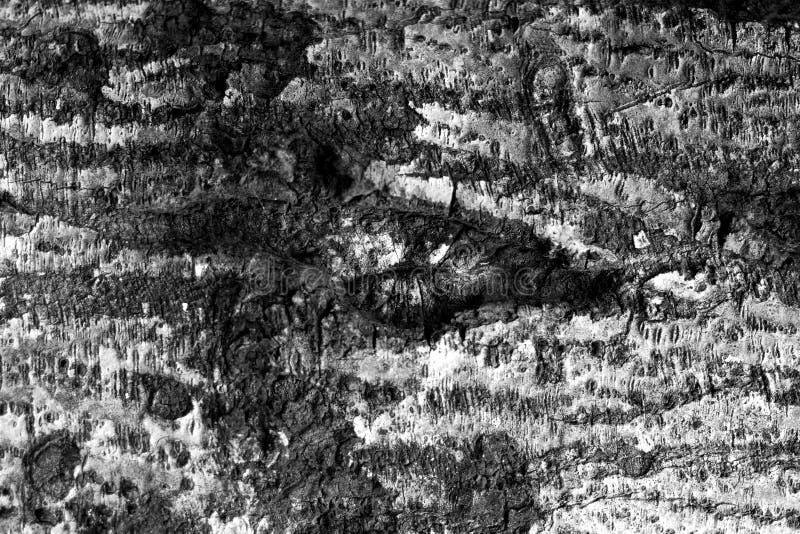 Fondo de madera de la textura blanco y negro imagen de archivo libre de regalías