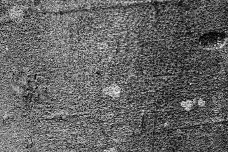 Fondo de madera de la textura blanco y negro foto de archivo libre de regalías