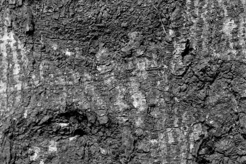 Fondo de madera de la textura blanco y negro foto de archivo