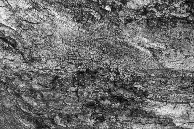 Fondo de madera de la textura blanco y negro imágenes de archivo libres de regalías