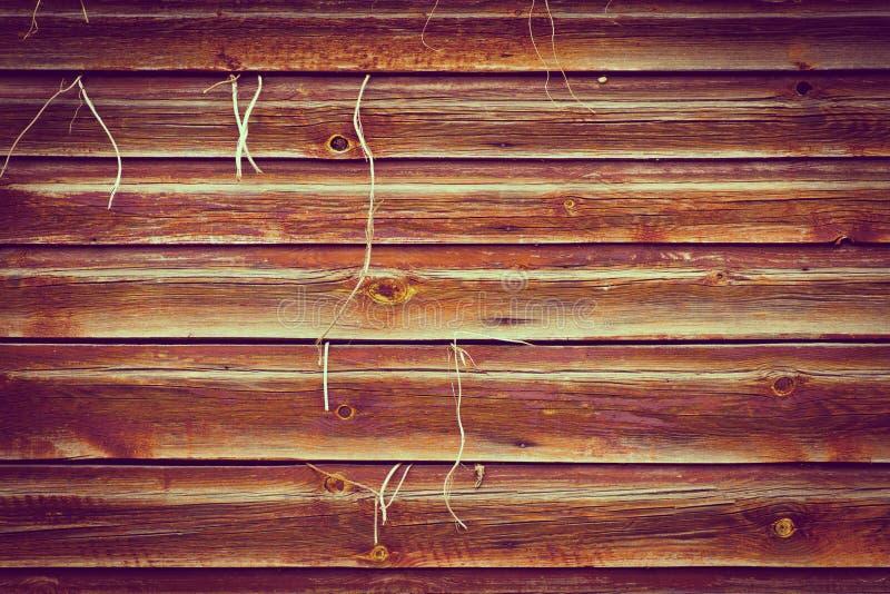 Fondo de madera de la textura con la planta que crece hacia fuera foto de archivo