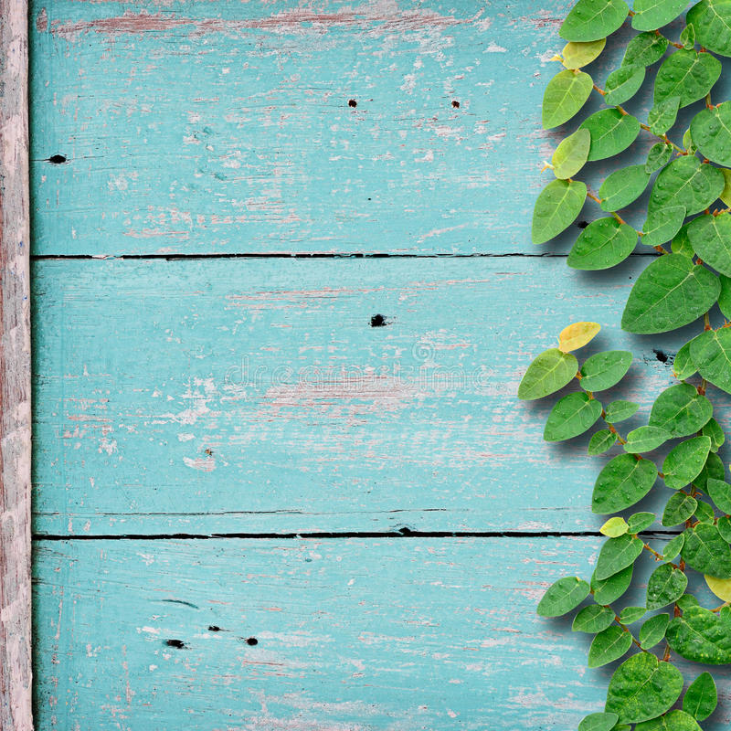 Fondo de madera del Grunge en color verde con la planta del árbol de la fijación de la hiedra foto de archivo