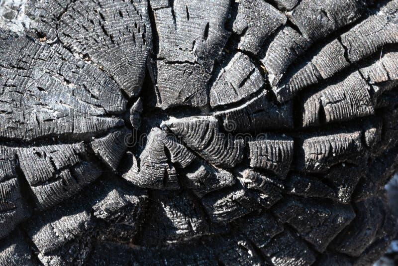 Fondo de madera hermoso Fondo de la ceniza Fondo negro Fondo chamuscado del árbol fotografía de archivo