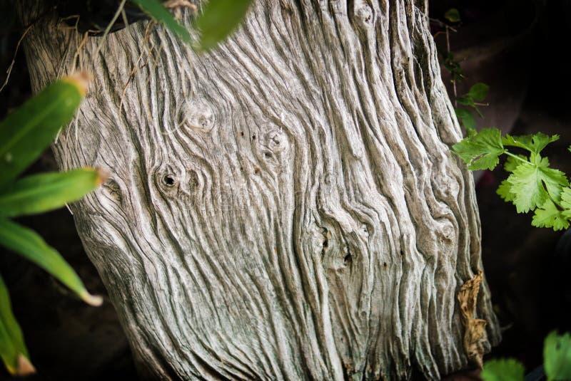 Fondo de madera de la textura del color de la naturaleza Vieja textura de madera imagen de archivo libre de regalías