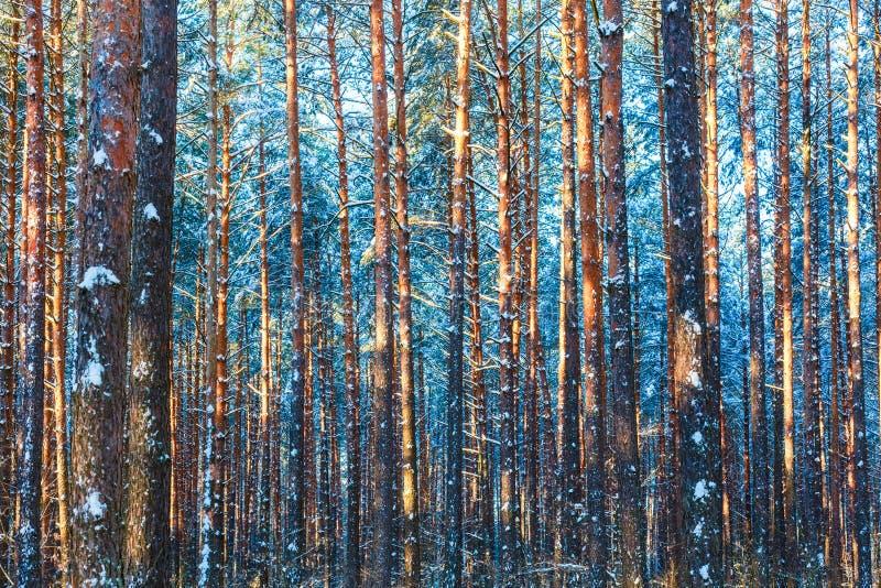 Fondo de maderas de la nieve de la naturaleza del bosque del invierno imágenes de archivo libres de regalías