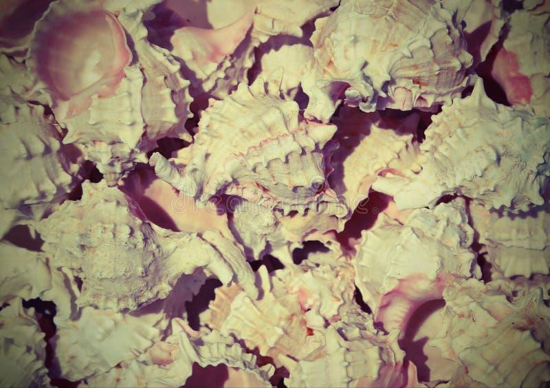 Fondo de muchas cáscaras exóticas foto de archivo libre de regalías